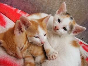 cats_cute_kitten