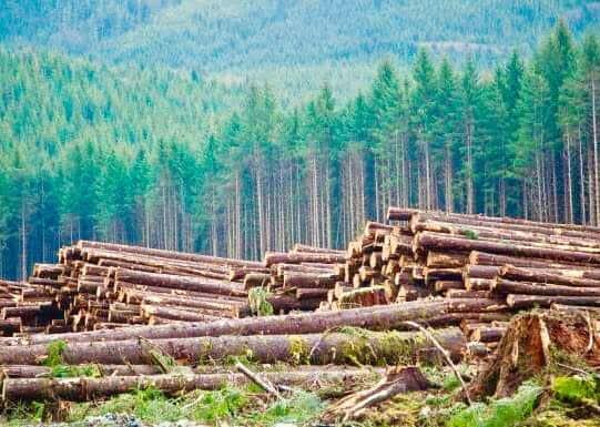 ブリティッシュコロンビア州の自然の持続可能性